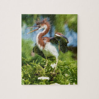 Tricolored Heron Chick in a Tree Puzzle Puzzles