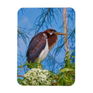 Tricolored Heron in a Tree Premium Magnet