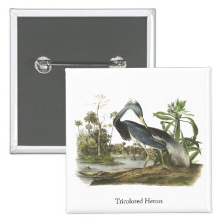 Tricolored Heron John Audubon Button