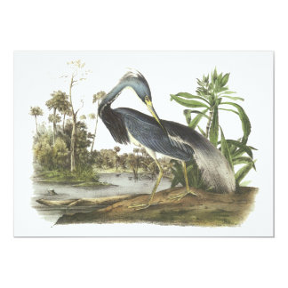 Tricolored Heron, John Audubon Card