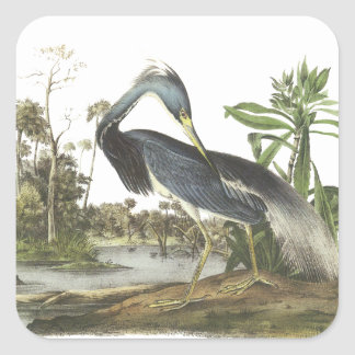 Tricolored Heron, John Audubon Square Sticker