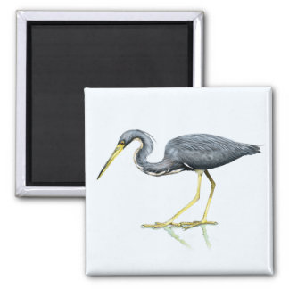 Tricolored Heron Magnet