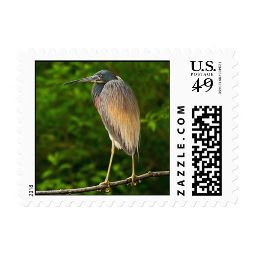 Tricolored Heron Postage Stamps
