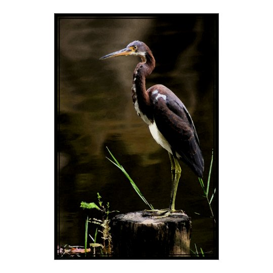 Tricolored Heron Poster -40x60 -other sizes also