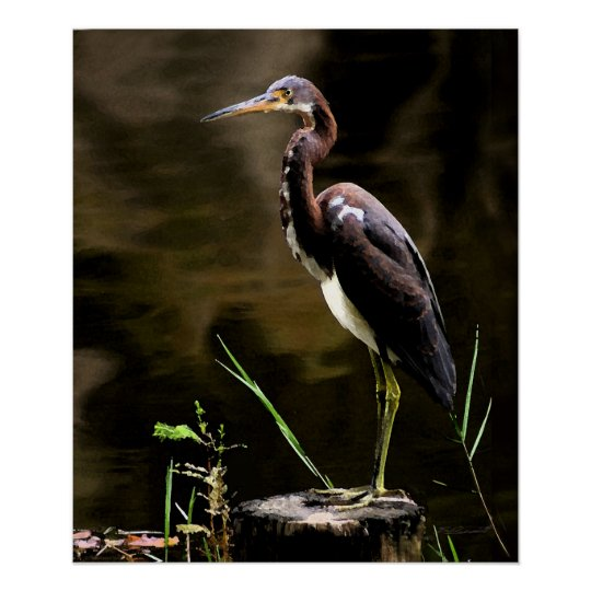 Tricolored Heron Print -20x24 -other sizes also