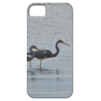 Tricolored Heron Reddish Egret Bird Nature iPhone 5 Cover
