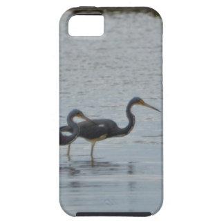 Tricolored Heron Reddish Egret Bird Nature iPhone 5/5S Cases