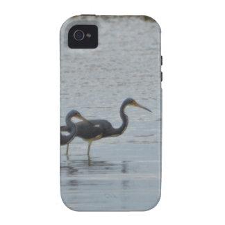 Tricolored Heron Reddish Egret Bird Nature iPhone 4 Cover