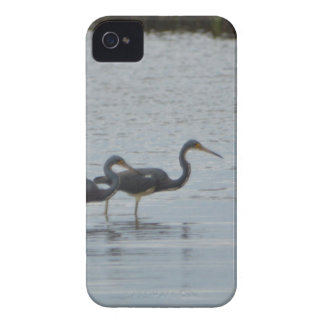 Tricolored Heron Reddish Egret Bird Nature iPhone 4 Case-Mate Cases