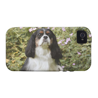 Tricolour Cavalier King Charles Spaniel on grass Case-Mate iPhone 4 Covers