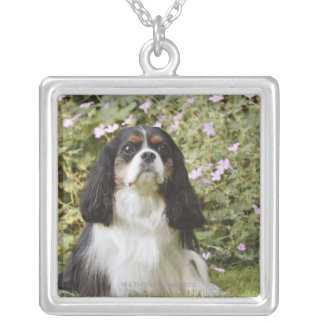 Tricolour Cavalier King Charles Spaniel on grass Silver Plated Necklace