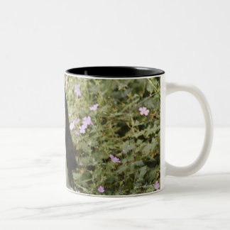 Tricolour Cavalier King Charles Spaniel on grass Two-Tone Coffee Mug
