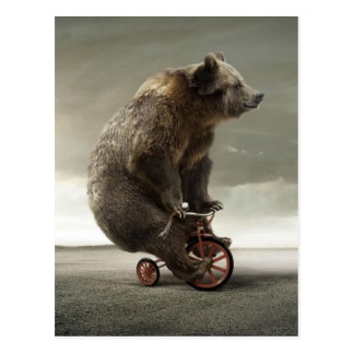 Tricycling Bear Postcard