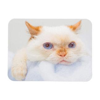 Trident el imán 03 del gato