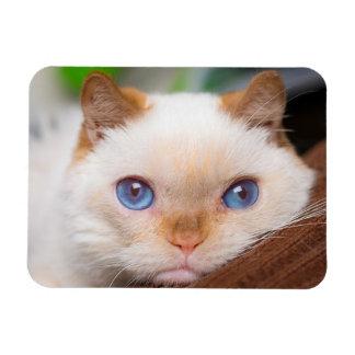 Trident el imán 04 del gato
