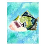 trigger fish sea life painting art prints postcard