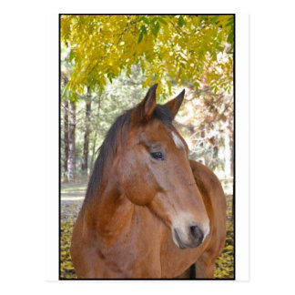 Trigger ~ The Incredible Rescue Horse Postcard