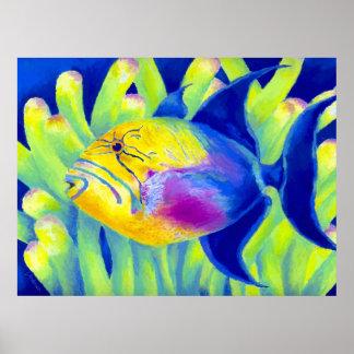 Triggerfish de reina posters
