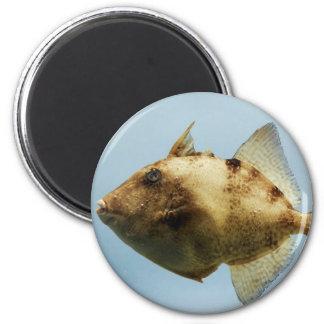 Triggerfish gris imán redondo 5 cm