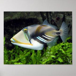 Triggerfish Impresiones