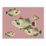 Triggerfish Post Card