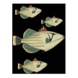 Triggerfish Tarjetas Postales