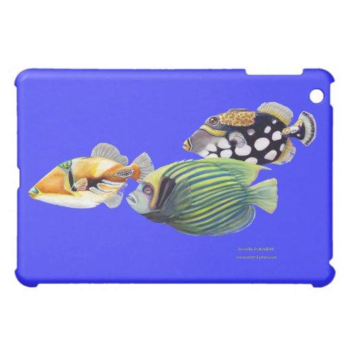 Triggerfish, Triggerfish del payaso y emperador