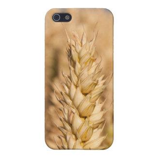 Trigo iPhone 5 Carcasas