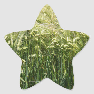 ¡Trigo - hermoso! Calcomanía Forma De Estrella