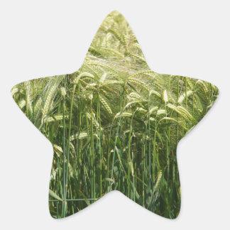 ¡Trigo - hermoso! Pegatina En Forma De Estrella