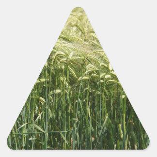 ¡Trigo - hermoso! Pegatina Triangular