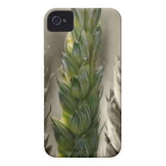 Trigo macro - Wheat Macro Carcasa Para iPhone 4