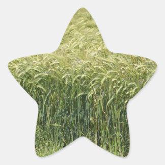 ¡Trigo - sabroso! Pegatina En Forma De Estrella