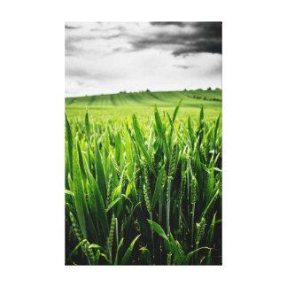 Trigo y paisaje