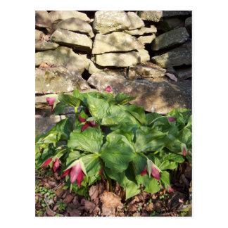 Trillium en primavera tarjeta postal