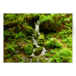 Trillium Falls at Redwood National Park Card