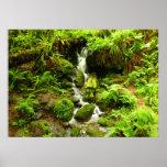 Trillium Falls at Redwood National Park Poster