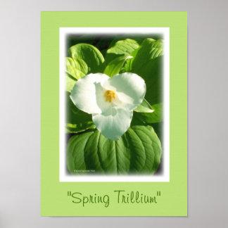Trillium Flower Posters | Zazzle