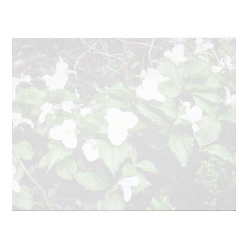 Trillium Grande-Florecido blanco (Trillium Grandif Membretes Personalizados