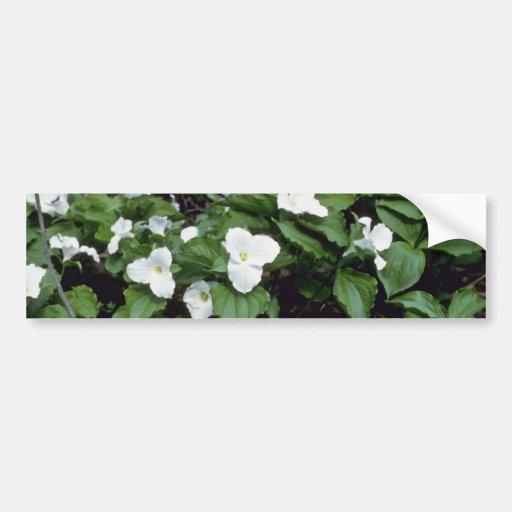 Trillium Grande-Florecido blanco (Trillium Grandif Pegatina Para Auto