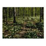 Trilliums, arboreto de Morgan, rojo de Montreal, Q Tarjeta Postal