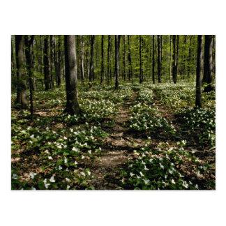 Trilliums, Morgan Arboretum, Montreal, Quebec Red Postcard