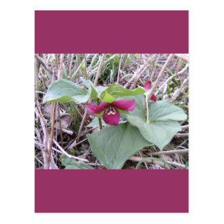 Trilliums rojos tarjeta postal