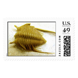 Trilobite Cibele bellatula Postage Stamps
