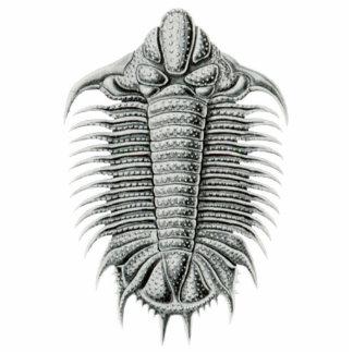 Trilobite Cutout Magnet/Sculpture