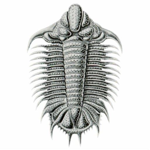 Trilobite Cutout Magnet/Sculpture Photo Cutouts