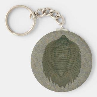 Trilobite del fósil de Arctinurus Boltoni Llavero Redondo Tipo Pin