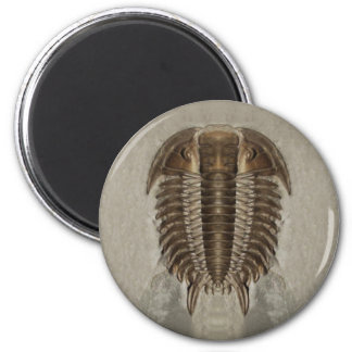Trilobite Fossil Magnet