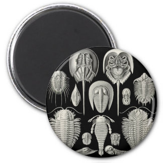 ¡Trilobite! Imán Redondo 5 Cm