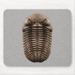 Trilobite Mousepad Tapetes De Raton